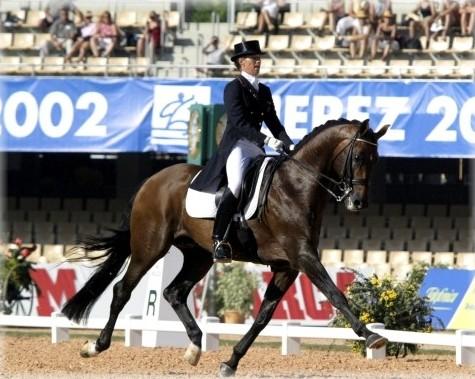 Dressage Horse Krack C