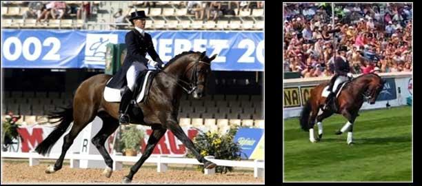 Dressage Horse Krack C ridden by Anky van Grunsven