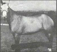 Chickasaw Horse