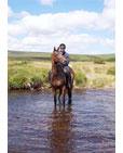 Horse Riding in Devon's Dartmoor Park