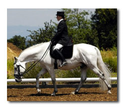 Dressage - the free walk