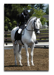 local riding dressage tips - a good halt