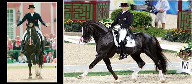 Dressage Horse Don Schufro