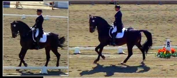 Top Dressage Horse Ravel competing for the 2008 Olympic Team