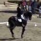 Dressage Horse Ravel