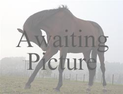 Horses Voice Rescue & Rehabilitation Centre