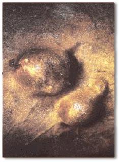 Equine Sarcoids Fibroblasts