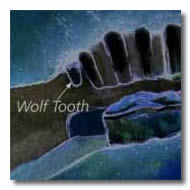Horse Teeth Terms - Wolf Teeth