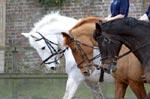 Bedgebury Riding Centre