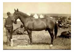 Keogh's Morgan-bred horse Comanche in 1887
