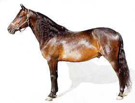 The Morgan Horse Breed