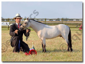 Aesthete Miniature Horses - All Breeds Miniature Horse Show