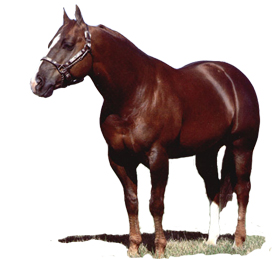 The Quarter Horse Breed