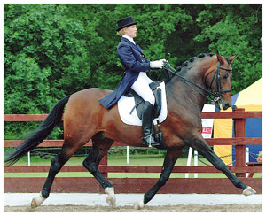 Top Dressage Stallion Radar