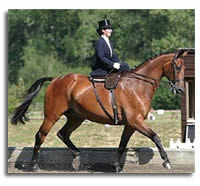 The Modern Side-Saddle