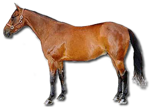 Horse Breeds - The Standardbred Horse