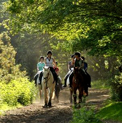 Hacking with Wimbledon Stables