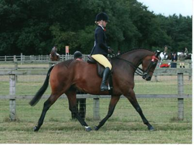 Bradway Spring Storm, home bred at Bradwell Equestrian