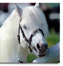 Canterbury Horse Rescue