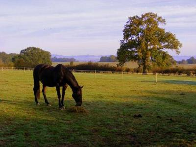 Grazing at Cedars Equestrian