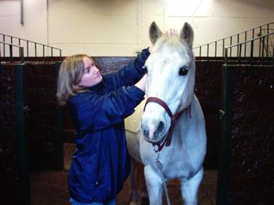 Diane Cassels Equine Massage