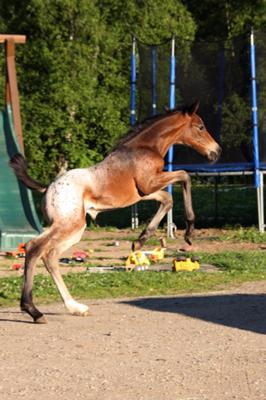Rider and Horse Sports Injuries & Therapy