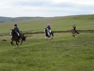 Cantering on The Trail