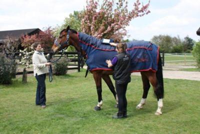 Gates Equestrian - Teddy