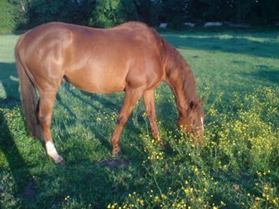 Naturally Horse