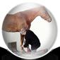 Horse Vet Icon