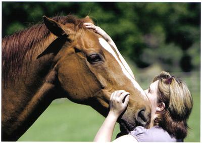 Judy Bradley - Professional Equine