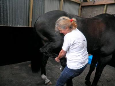 Kathy Treating Various Horses