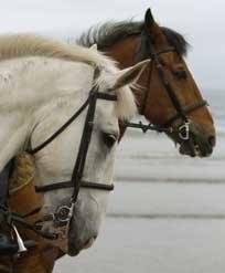 Kimmerston Horses