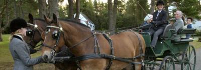 Kinrossie Horse Drawn Cariiage Rides