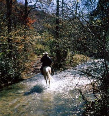 Redhill Horse Camp