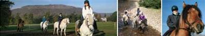 Rothiemurchus - Strathspey Highland Ponies