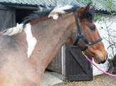 Horses at Weybridge Equestrian Centre