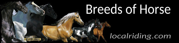 Breeds of Horse Information & Suitability