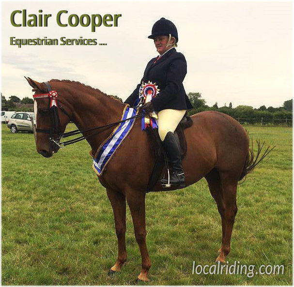 Claire Cooper Equestrian Services - Show Horse