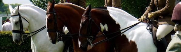 Cob Horse Show Class
