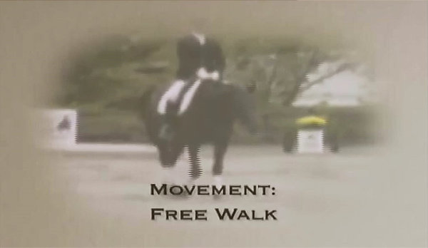 The Free Walk On A Long Rein Local Riding