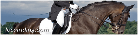 Dressage Tack & Equipment to help get started