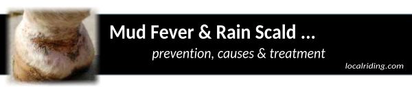 Equine Mud Fever & Rain Scald prevention causes and treatment