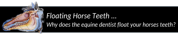 The Equine Dentist & Floating Horse Teeth Manually