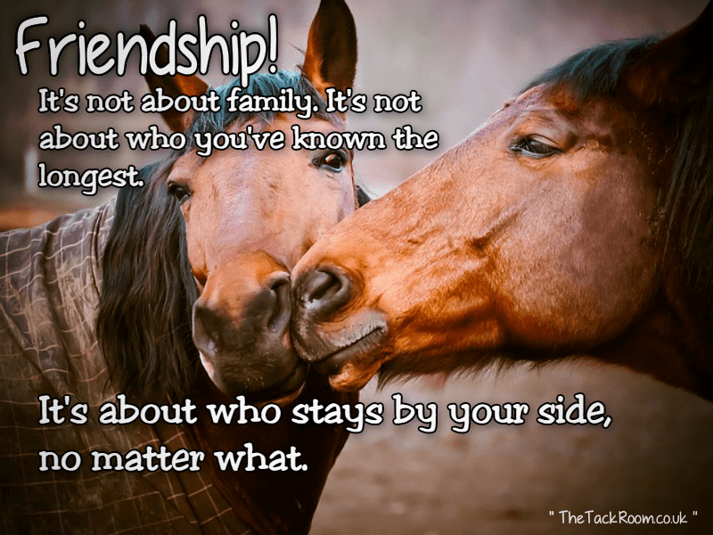 Friendship - Whats it all about
