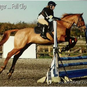 Ginger - Full Horse Clip Legs On - Nov 2017