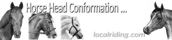 Types of Horse Head Conformation