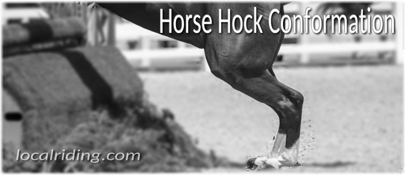 Buying a Horse then Horse Hock Conformation Matters