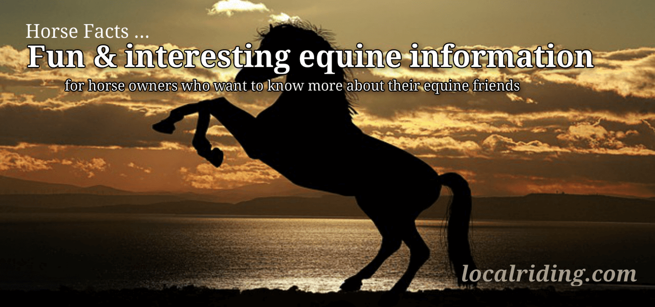 Horse Facts - Fun & interesting equine information
