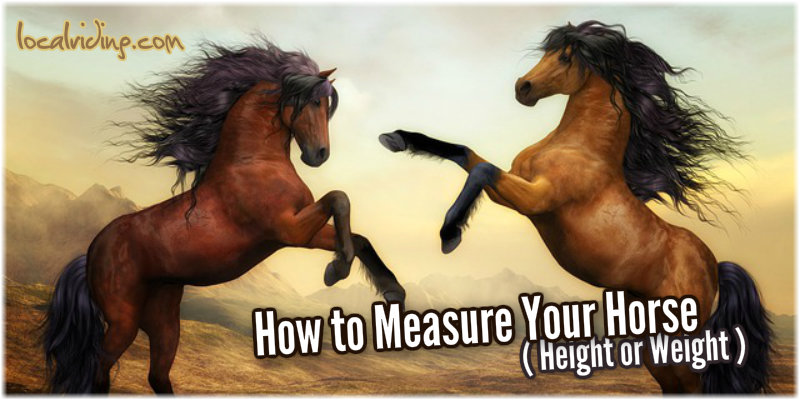 How To Measure Your Horse